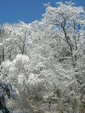 thumbnail - Winterlandschaft im Leubengrund