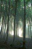 thumbnail - Verwunschener Wald...Hier soll vor wenigen Jahrhundet noch Schlachtengetümmel geherrscht haben. Heute kaum noch vorstellbar.