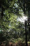 thumbnail - Wald bei Kürrenberg