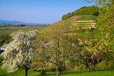 thumbnail - Frühling am Castellberg