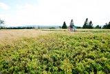 thumbnail - In der Hochheide-Landschaft des Kahlen Astens