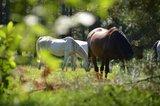 thumbnail - Senner Pferde auf der Wildweide