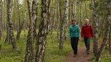thumbnail - Wanderer im Birkenwald der Rostocker Heide