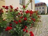 thumbnail - Rosen am Schloss Königswusterhausen