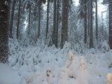 thumbnail - im Winterwald