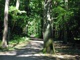 thumbnail - Wanderung durch den Bienwald