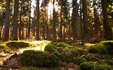 thumbnail - Moosbedeckter Waldboden
