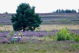 thumbnail - Blick auf die Mehlinger Heide