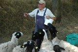 thumbnail - Hans Engert mit seinen Schafen