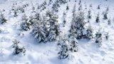 thumbnail - Winterlandschaft Oben im Harz
