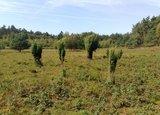 thumbnail - Goxeler Heide