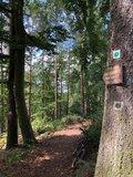 thumbnail - Waldgebiet bei Weißen