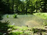 thumbnail - Teich im Barfuß-Erlebnis-Park