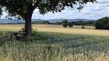 thumbnail - Blick von Freimersheim Richtung Haardt