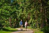 thumbnail - Waldweg bei Ringe