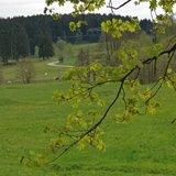 thumbnail - Blick ins Dammbachtal
