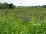 thumbnail - Blühende Landschaft