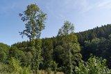 thumbnail - Ausblick über Baumkronen