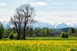 thumbnail - Blick in die Berge aus der Weilheimer Ammer Au