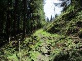 thumbnail - Schöner Trail aufwärts im Tiefenbachtal