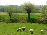 thumbnail - Viel Natur und für den Niederrhein typische Kopfweiden