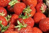 thumbnail - Bio-Erdbeeren von Gut Birkenmoor