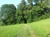 thumbnail - Weg zum Wald