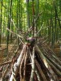 thumbnail - Wald-Tipi