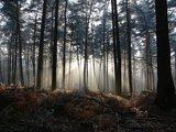 thumbnail - Schleifenroute - Sonnenschein im Wald Leucht