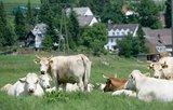 thumbnail - Bäuerliche Idylle in Leveringhausen