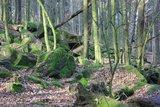 thumbnail - Blockschutt an der Nordseite des Kleinen Bergs Hohburg
