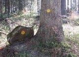 thumbnail - Dukaten im Wald