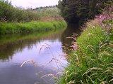 thumbnail - Das idyllische Flüsschen Weida