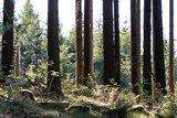 thumbnail - Blick in den Wald