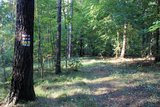thumbnail - Wanderweg im Thümmlitzwald