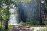 thumbnail - Wald Kellenhusen