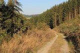 thumbnail - Weg im Ruthmecketal