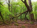 thumbnail - Nationalpark Hunsrück-Hochwald