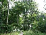 thumbnail - Wege durch Buchenwald auf Kalkgestein