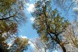thumbnail - Herbst im Oderwald