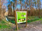 thumbnail - Naturlehrpfad im Kühlungsborner Stadtwald