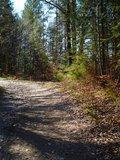 thumbnail - Auf ruhigen Forstwegen geht es durch den Wald in Richtung Frechensee.