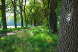 thumbnail - Allee bei Clarholz