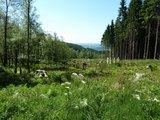 thumbnail - Blick über eine Kyrillfläche nach Meinerzhagen