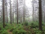 thumbnail - Waldgebiet im Kalltal