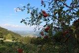 thumbnail - Herbst auf den Grassauer Bergen