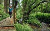 thumbnail - Auf dem Steg am großen Rehbach