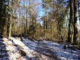 thumbnail - Schnee im Pfälzerwald