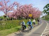 thumbnail - Radeln zwischen Kirrweiler und Venningen