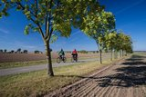 thumbnail - Bauerngartenroute - Allee